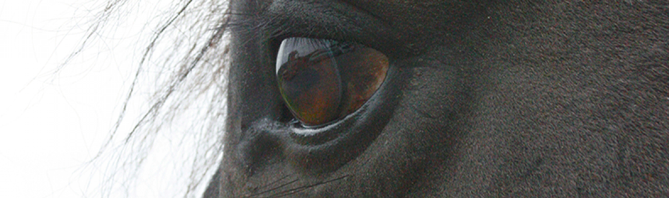Main image is a close up of a horses eye