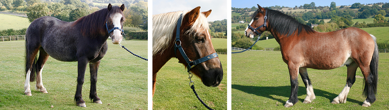 Adopt a horse or pony at CSRC