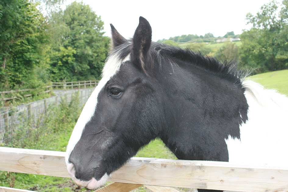 Rehoming Horses And Ponies From Clwyd Special Riding Centre